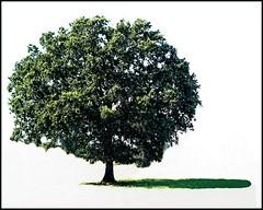 tree 205 (freddylong) Tags: green art nature landscape lumix bomen groen creative natuur landschap creations naturescenes fz8 lumixfz8
