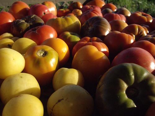 Heartbeat CSA: tomatoes