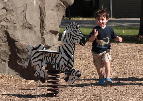 Oh boy!  Zebra!