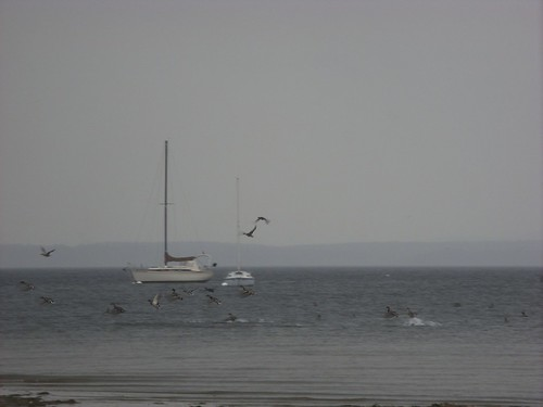 sailboats & birds as the storm moves in