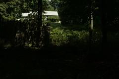 _MG_6495.JPG (zimbablade) Tags: trees sleepyhollow dougmiller videopoem