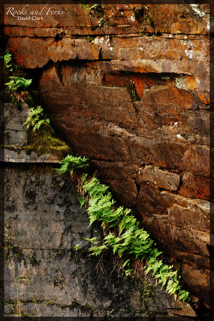 A green diagonal slash of ferns growing on a ledge between brown and grey rocks.