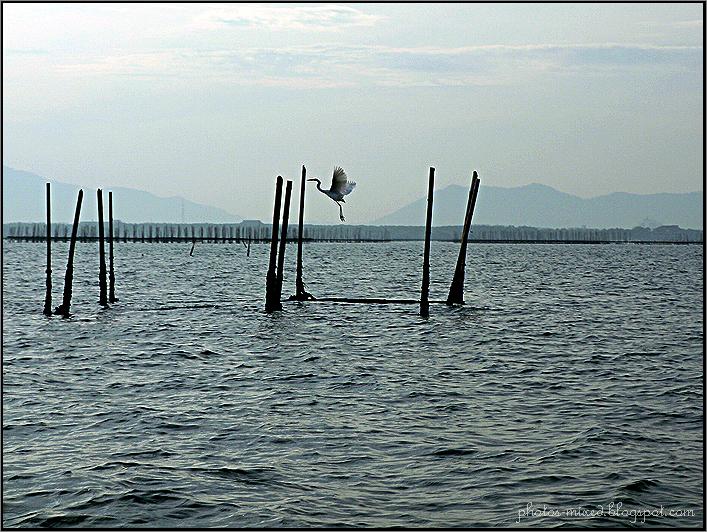 Chonburi Bay 9