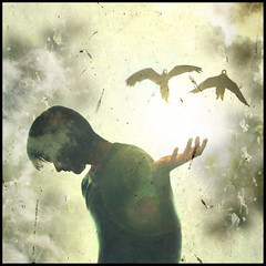 Choose your own path (Daniel Smith Photography) Tags: light shadow sun selfportrait birds silhouette clouds bright release flight parrot 365 textured