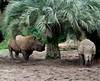 Rhinos (kittykat7) Tags: rhinos wdw waltdisneyworld animalkingdom kilimanjarosafaris impressedbeauty impressedbyyourbeauty