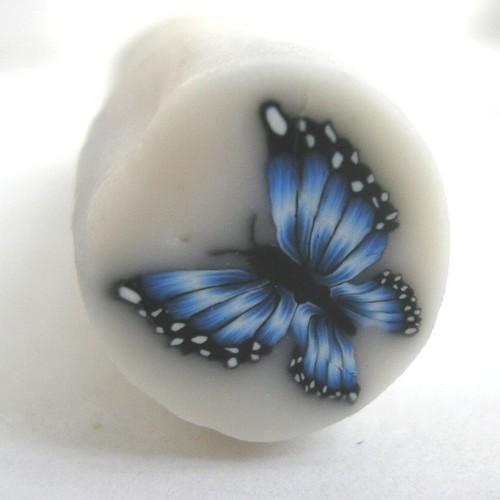 Blue Morpho #4