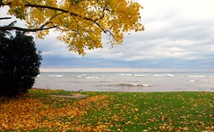 Lake Ontario in Autumn (blmiers2) Tags: blue autumn trees sea sky orange lake newyork seascape color tree green fall nature water beautiful leaves yellow clouds season landscape geotagged leaf maple nikon october colorful seasons fallcolors branches lakes autumncolors fallfoliage foliage lakeontario webster inlandlake websterny ontariofishing lakesontario blm18 blmiers2
