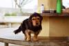 Simpático (Marcelo M P Mariano) Tags: dog foto sp e clube nikonf80 fotoclube sigma2470mmf28dgmacro urbanova fisp fujicolorprovalue200 sãojosédoscampossp hípicaunivap wwwmarcelompmarianocombr