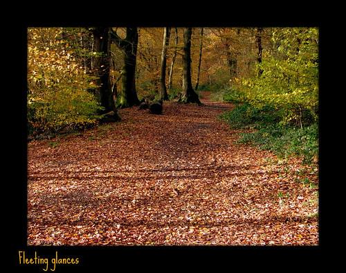 238. Woodland walk