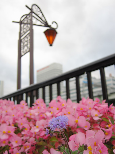 the Nakanoshima promenade in Osaka City (2)
