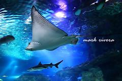 12-19-2009 IMG_2965 (markieboy) Tags: world water island underwater under pleasure guam tumon