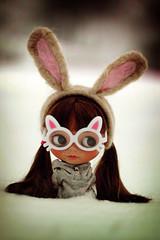 Winter Bunny - 167/365 ADAD
