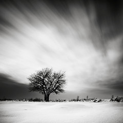 Lonely willow (p i c a) Tags: longexposure sky cloud snow lund tree landscape skne sweden himmel willow sn trd snowscape pil moln ndfilter piltrd nd110 hoyand8 bwnd110