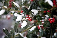 Happy Holidays! (KennethVerburg.nl) Tags: christmas winter white snow holland netherlands dutch sneeuw nederland wit flevoland almere almerehaven
