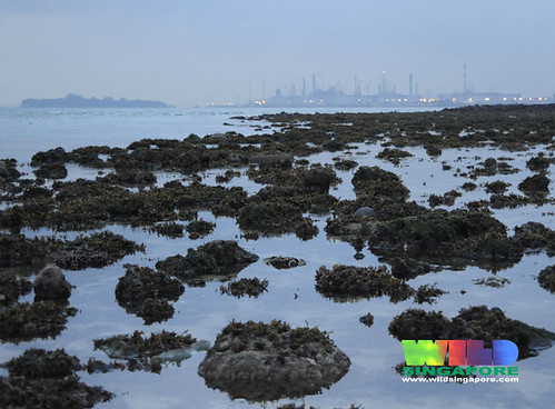 Pulau Hantu and Pulau Bukom from Pulau Jong