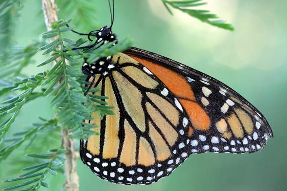 071809_butterfly04