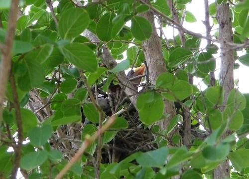 Baby in nest 2