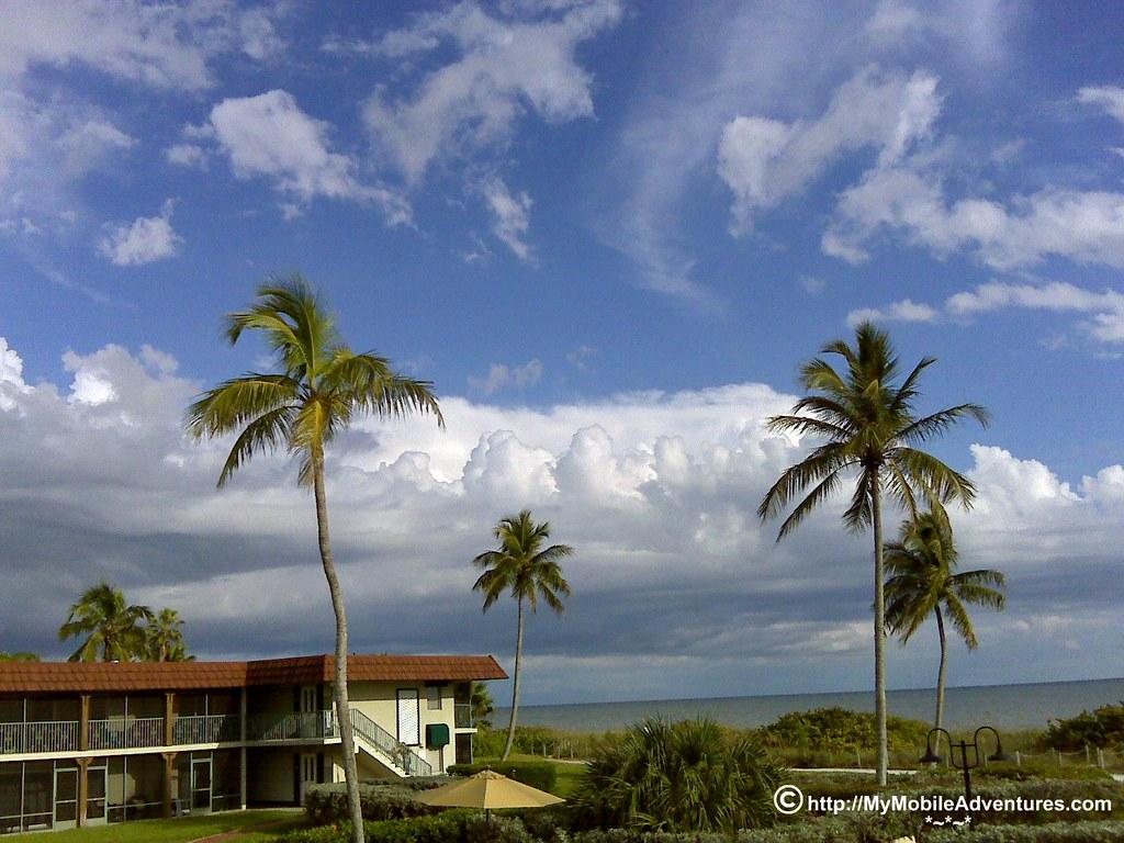 IMG00413-Sanibel-palms-painted-sky