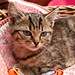 20090829_nieuwe_poes_006