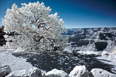 Grand Canyon - IR (sausyn) Tags: blue winter sky panorama white tree ir blu grandcanyon infrared inverno bianco filtro infrarosso infrarossi