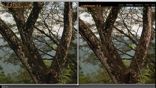 Nikon D300 NEF / RAW file conversion -- Nikon Capture NX2 vs Adobe Lightroom 2.4