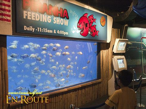 Aquaria KLCC Piranha Feeding Center