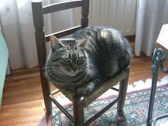 sitting in a chair (AEA_93) Tags: cat chair gato silla rallitas