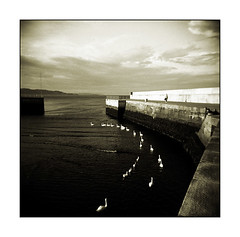 Bray Harbour Swans (Monosnaps) Tags: old city ireland our urban bw dublin irish poster photography holga photographer postcard toycamera images lo eire special posters friendly fi eddie vignetting wicklow dub bray dubs everyones mallin monosnaps holgablackandwhite filmholga clondalkincameraclub holgainblackandwhite holgainmono