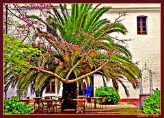 Convento Santa Catalina.2 (susanamule) Tags: argentina buenosaires prayer palmeras nuns palm latinoamerica cells convent monjas oracin sudamrica latinoamrica latinamericanart celdas artelatinoamericano conventosantacatalina susanamule susanamul