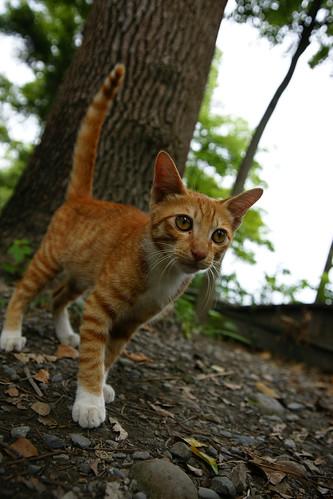 貓咪。這隻貓咪應該是野貓吧