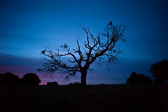 the barren tree (ym32) Tags: tree hampsteadheath barren f28 21mm carlzeiss biogon leicam9