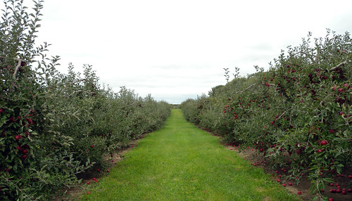 Oriole Springs Orchard