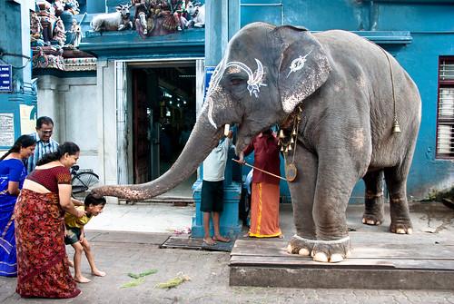L'enfant et l'éléphant