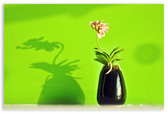 On a day like today... (Yug_and_her) Tags: light india flower reflection green wall miniature office shadows shine interior pot hyderabad handcrafts pixelloid