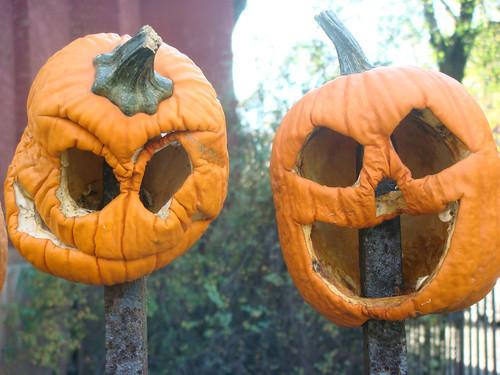 kane street pumpkin