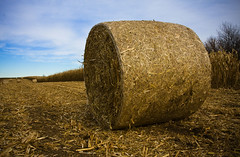 rolled here first. (lada/photo) Tags: autumn fall wisconsin corn farming fields bales cornbale ladaphoto