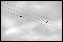 Crows (carmenqw) Tags: ireland gris gray cable nubes crow numb cuervo iralanda