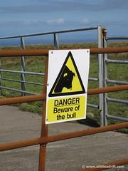 Danger Bull on Cliffs of Moher Path