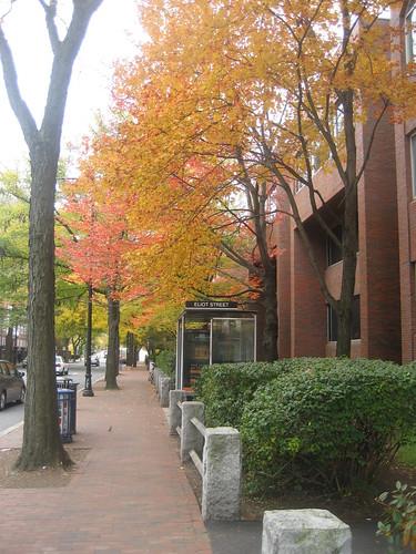 20091031 Fall in Boston 025