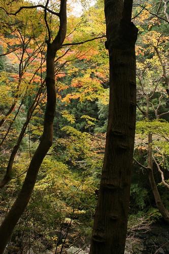 紅葉の白倉峡(その3)