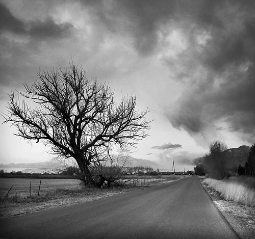 tree and a back utah lane composite bw