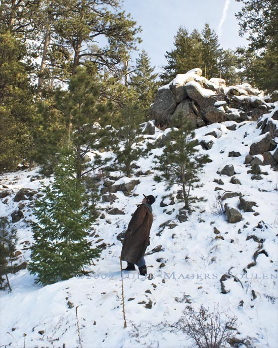 Man looks considers small fir tree for Christmas tree in the Rocky Mountains.