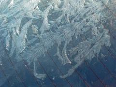 Jack Frost (1) (AntyDiluvian) Tags: frost suburban massachusetts melrose suburb artful windowfrost fernfrost