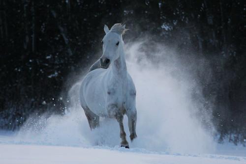 Thundering through the snow