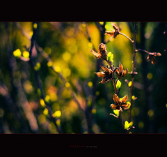 new life (ildikoneer) Tags: plant green nature canon eos spring hungary dof bokeh mm capture 50 t lightroom grdony 40d velencei mygearandme
