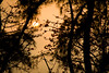 Shyly Sunset (Stanley Au) Tags: street sky sun plant tree canon eos spring 50d moodcreations