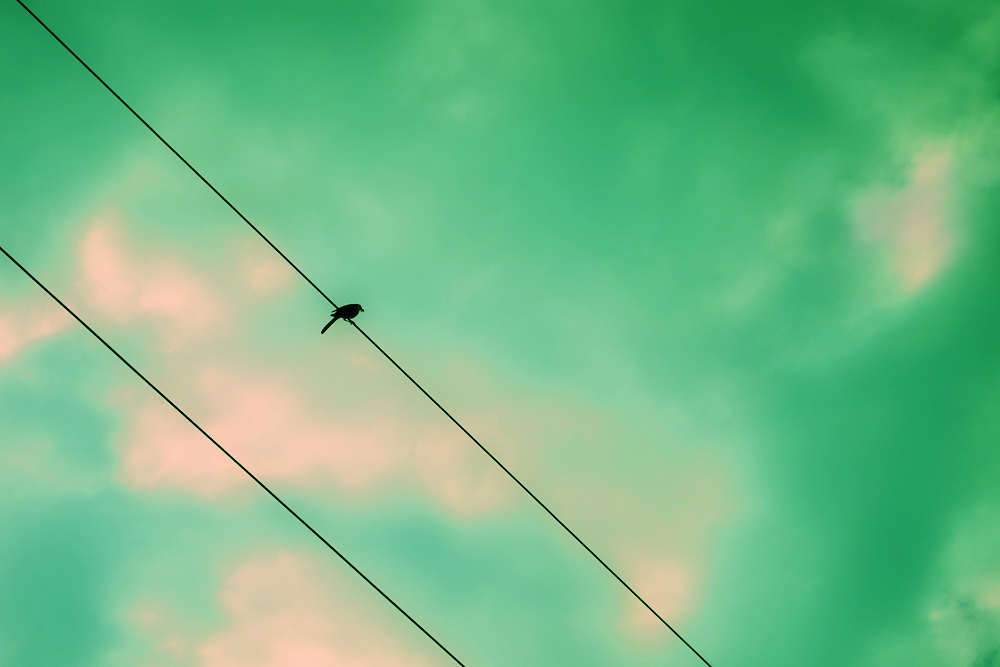 Cross Process 3/30:  Bird on a Wire
