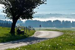 A lovely bench along the way (e/rol) Tags: road morning light mist tree bench landscape bayern deutschland bavaria countryside track harmony allgäu roshaupten
