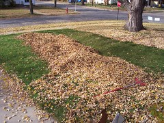 front yard leaves before