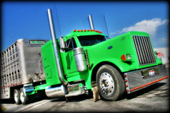 Green calfer (static bob) Tags: tractor green truck lights big semi chrome rig trailer lime livestock polished stacks peterbilt hauler 379 stait bullrack
